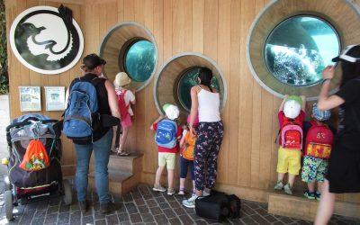 Kita Chinderstern Adliswil Zoo